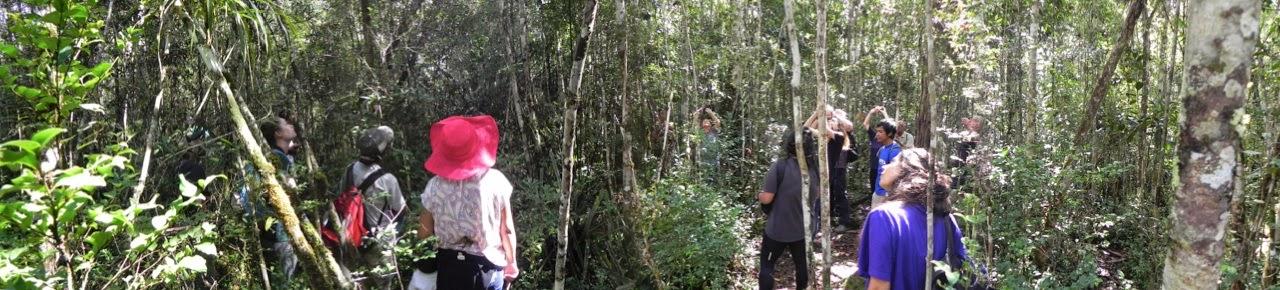 My fellow tourists: Andasibe-Mantadia National Park, Madagascar